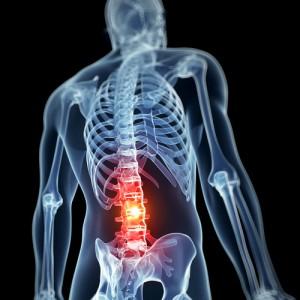 lumbar vertebrae kraus back and neck institute