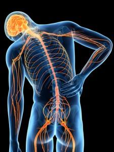 spinal deformities, spina bifida, spinal nerves, Houston, Woodlands, Katy, Spring, Sugarland, Sealy, Pearland, Baytown, Beaumont, Tomball, Galleria, Humble, Conroe, Kingwood, Port Arthur, Memorial City, Galveston